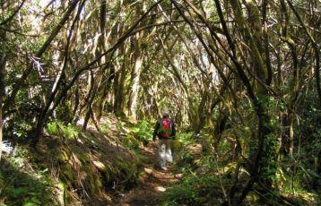 Wanderung durch den Regenwald Teneriffas
