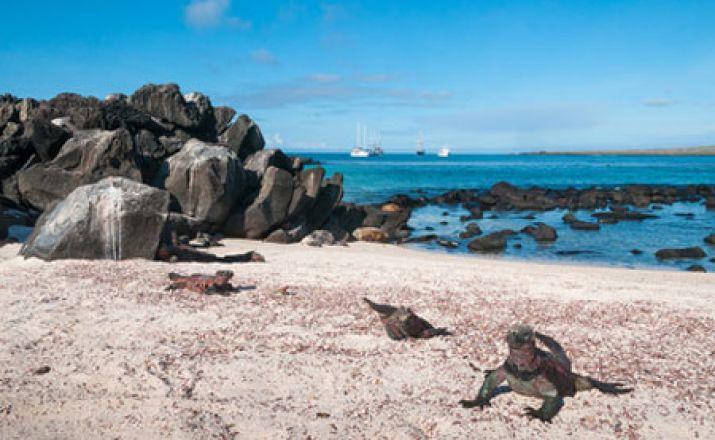 Best of Ecuador & Galapagos; 14-tägige Erlebnisreise; garantierte Durchführung ab 2 Personen Libos Fertig Touristik 1