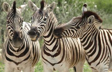 Namibia Gruppenreisen 13 Tage ab 3.199 €