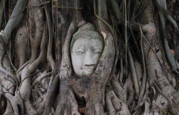 Ayutthaya & Khao Yai Nationalpark