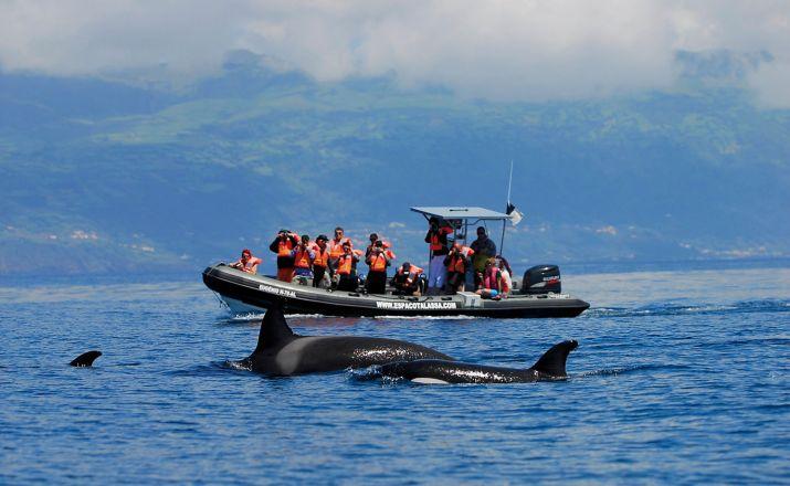 Wal- und Delfinbeobachtung