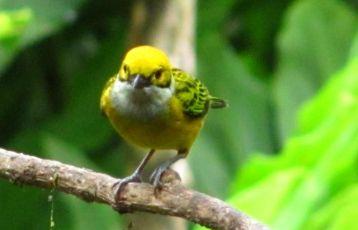 Ecuador Privatreisen 23 Tage ab 5.650 €
