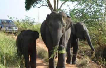 Colombo Safari Reisen 12 Tage ab 1.260 €