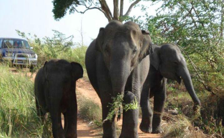 Sri Lanka Island Explorer - die besondere Erlebnisreise Sri Lanka Travel Partner 1