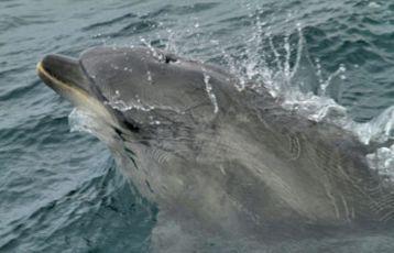 Delfinporträt
