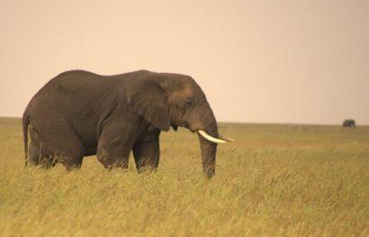 Tansania entdecken: Safari zu den Nationalparks im Norden
