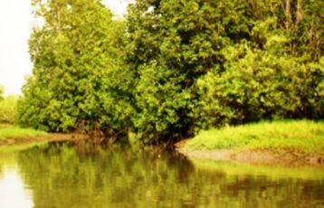 Gambia_Flusslandschaft