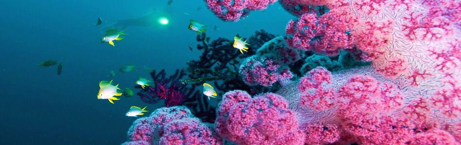 Unterwasserwelt der Philippinen
