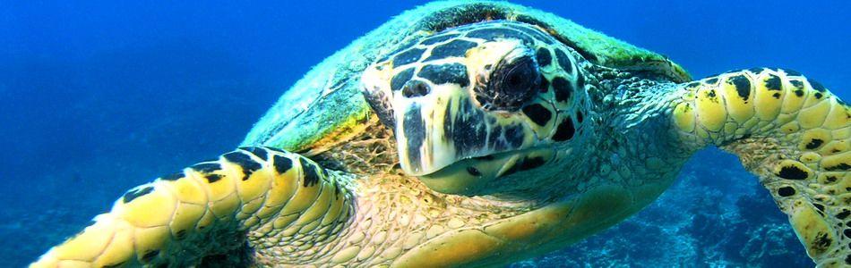 Unterwasserwelt von Tioman
