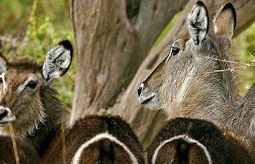 Botswana & Namibia tierisch schön