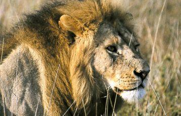 Tansania - dem Herzschlag der Natur ganz nah