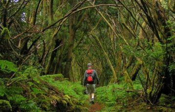 Wanderung durch den Lorbeer- und Heidewald auf El Hierro