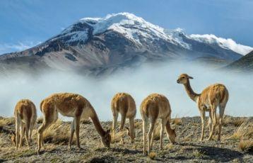 Ecuador - Chimborazo