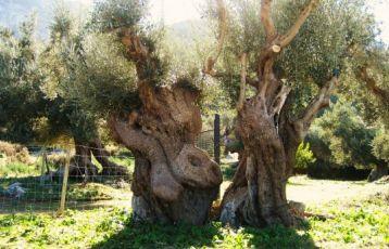 Mallorca Singlereisen 7 Tage ab 0 €