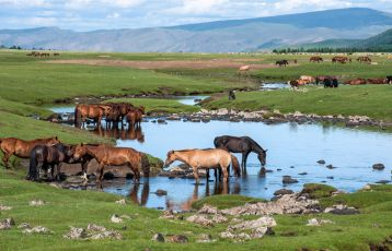 Mongolei-Rundreise-Orchontal