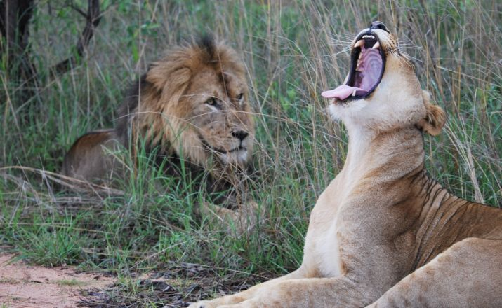 Intensiv erleben: das mystische Limpop mit wilden Tieren Südafrika wie ich es mag 1