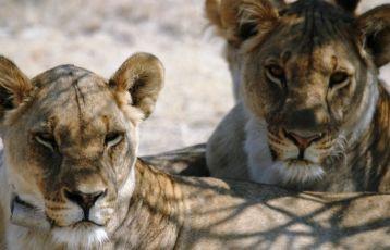 Namibia Rundreisen 17 Tage ab 3.940 €