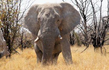 Namibia Safari Reisen 13 Tage ab 3.085 €