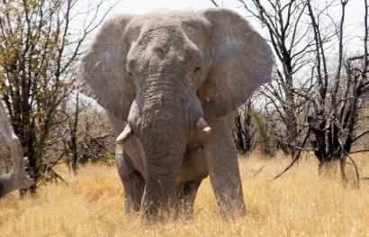Namibia Rundreise Kompakt