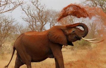 Kenia Safari Reisen 8 Tage ab 2.495 €