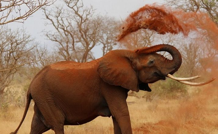 Höhepunkte Kenias Oasis Travel 1