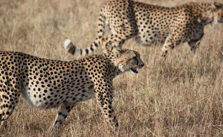 Südafrikas Höhepunkte Oasis Travel 1