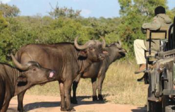 Südafrika Safari Reisen 3 Tage ab 508 €