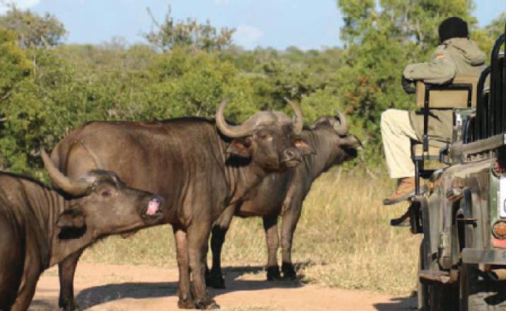 Classic Safari Experience Südafrika Deluxe 1