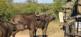Classic Safari Experience Südafrika Deluxe 2
