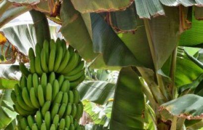 Auf in das Land wo die Bananen blühn - 8 abwechslungsreiche und erholsame Tage