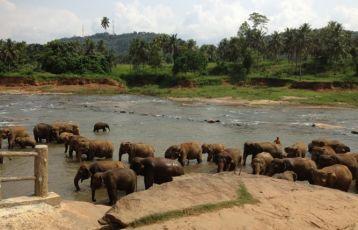 Sri Lanka Privatreisen 14 Tage ab 1.889 €