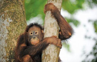 Borneo für Abenteurer (für Kinder ab 7 Jahren geeignet)
