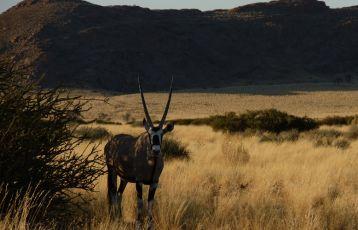 Namibia Mietwagen-Rundreise 19 Tage ab 2.281 €