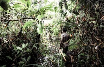 Ein Kuruwai läuft durch seinen Wald