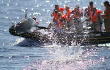 Azoren Natururlaub 8 Tage ab 555 €