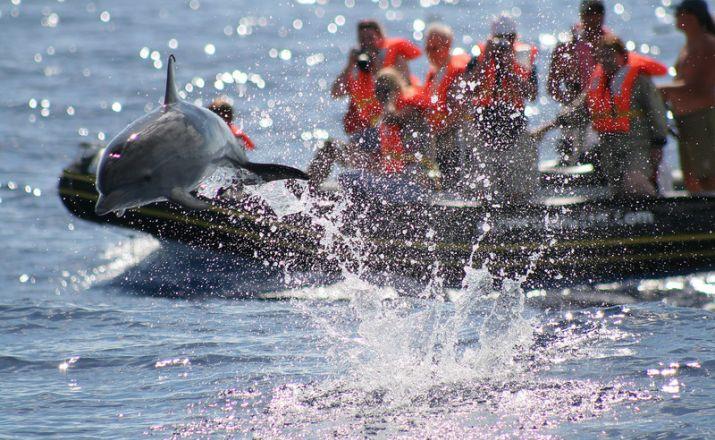 Pico - Delfine & Wale intensiv Reisen mit Sinnen, Pardon/Heider Touristik GmbH 1