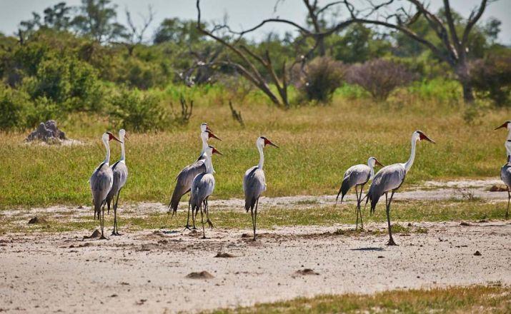 Safariromantik in Botswana - Kleingruppenreise Abendsonne Afrika GmbH 1