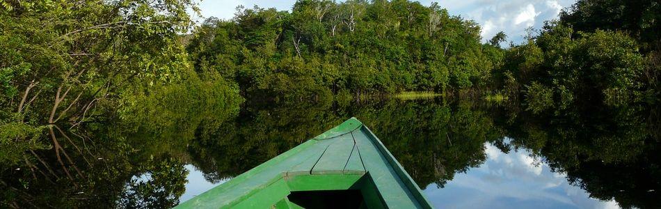 Brasilianischer Regenwald