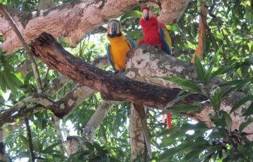 Costa Rica Kulturreisen 23 Tage ab 3.300 €