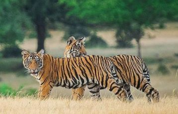Auf Tigersafari im Ranthambore Nationalpark