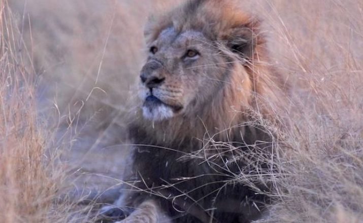 Abenteuer Botswana Punda Milia Travel 1