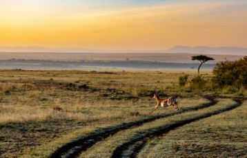 Kenia Safari Reisen 8 Tage ab 2.394 €