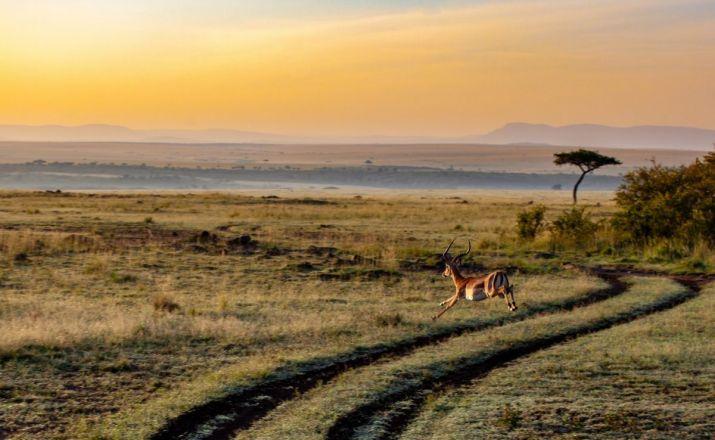 Kenias Klassiker Punda Milia Travel 1