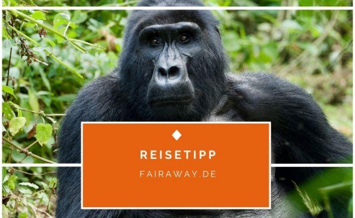 Abenteuerliches Uganda Trekking Fairaway Travel GmbH 1