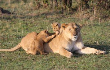 Kenia Safari Reisen 10 Tage ab 1.790 €