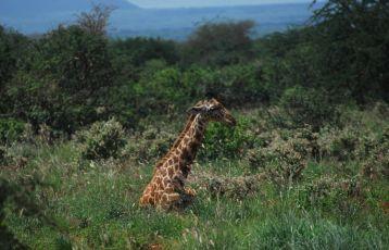 Tansania Safari Reisen 11 Tage ab 4.350 €