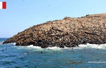 Seelöwenkolonie Peru, Palomino Islands