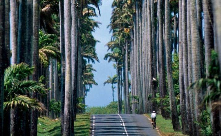 Guadeloupe erfahren: Per Mietauto mit vorgebuchten Hotels; 14-tägige Privatrundreise; garantierte Durchführung ab 2 Personen Libos Fertig Touristik 1