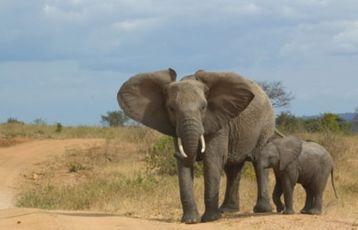 Tansania Safari Reisen 17 Tage ab 3.699 €