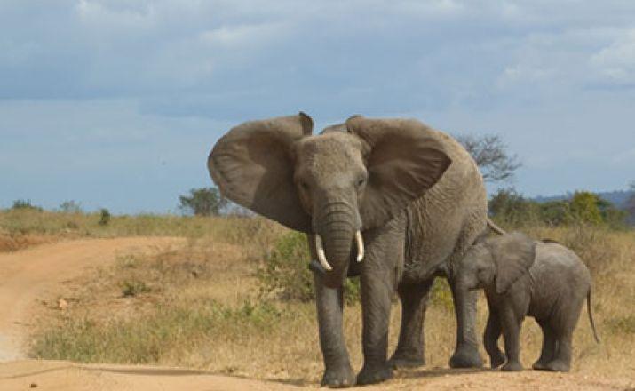 Best of Tansania & Serengeti & Sansibar - 17 Tage; garantierte Durchführung ab 2 Personen Libos Fertig Touristik 1